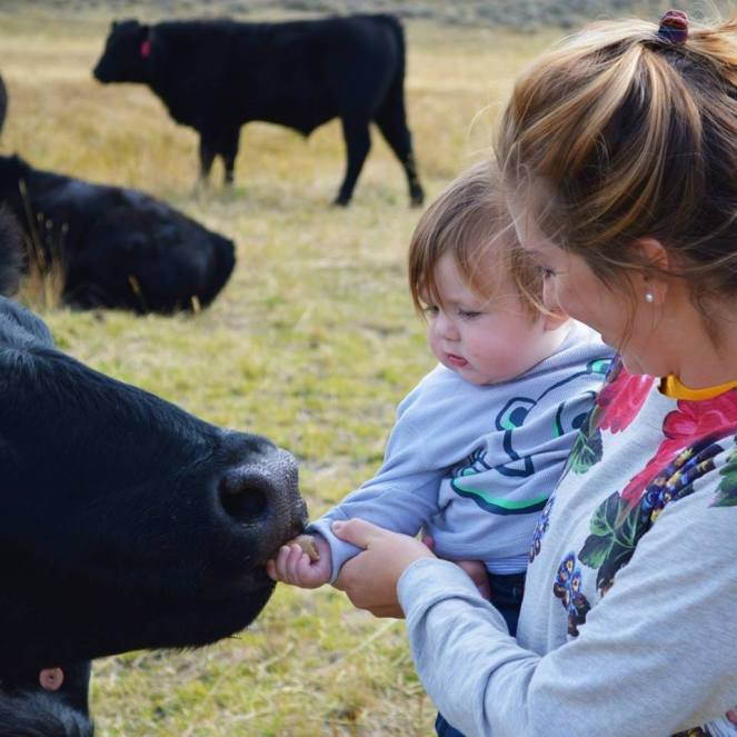 feeding-cows-with-wacey