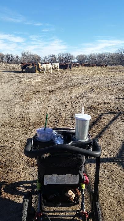 cows-stroller
