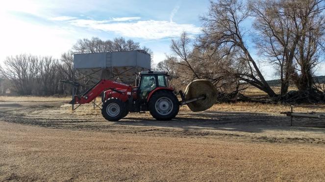 feeding-hay