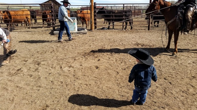 wacey watching ropers