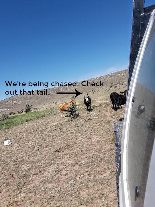 chasing truck edit