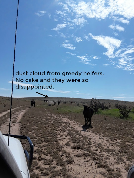 dust cloud edit