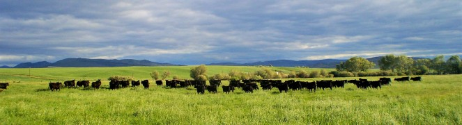 meadow (2).jpg